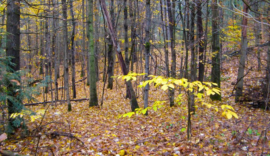 Trees-Northumberland